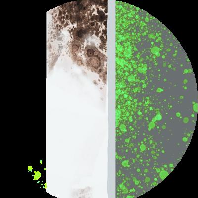 Funktion Schimmel-DRY Wand mit Schimmel