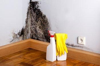 Feuchte Wand mit gefährlichem schwarzen Schimmel